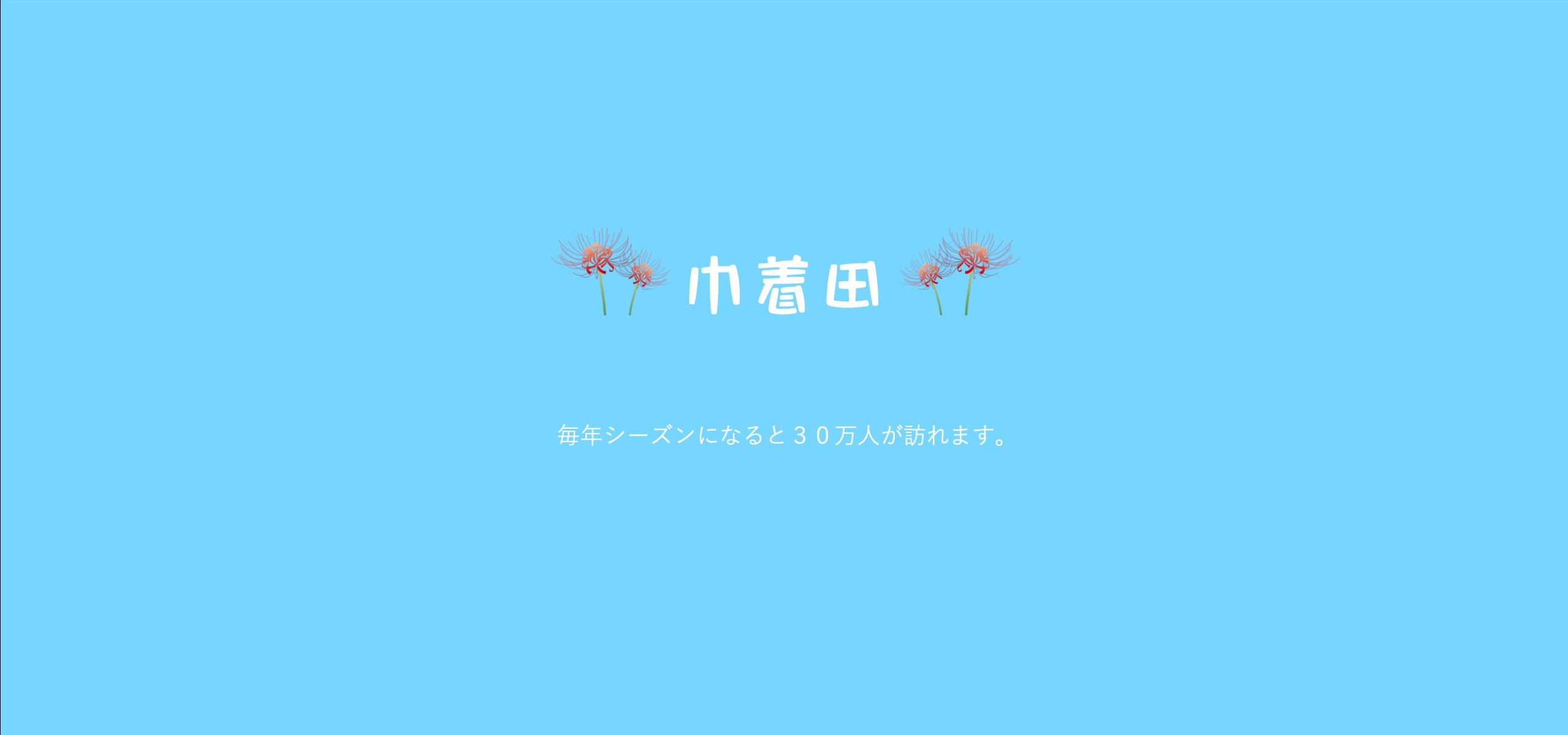 日高市巾着田の彼岸花【曼珠沙華】