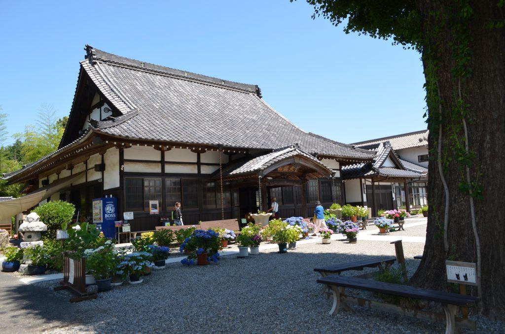 嵐山町金泉寺(あじさい寺)本堂前の画像