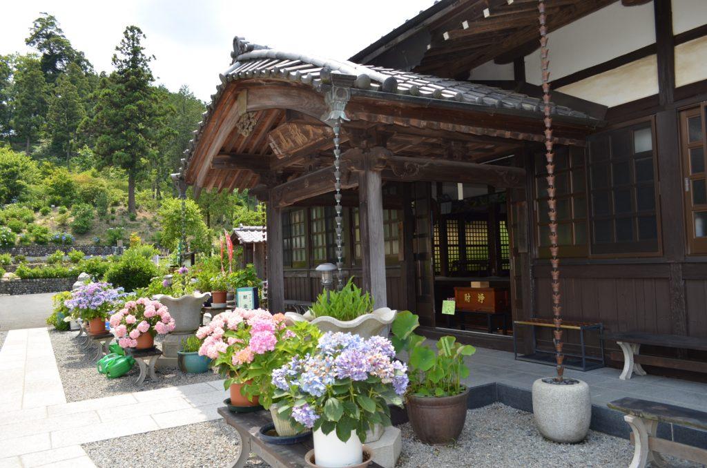 あじさい寺と呼ばれている埼玉県嵐山町にある金泉寺さんの本堂脇のあじさい。本堂に向かって右側