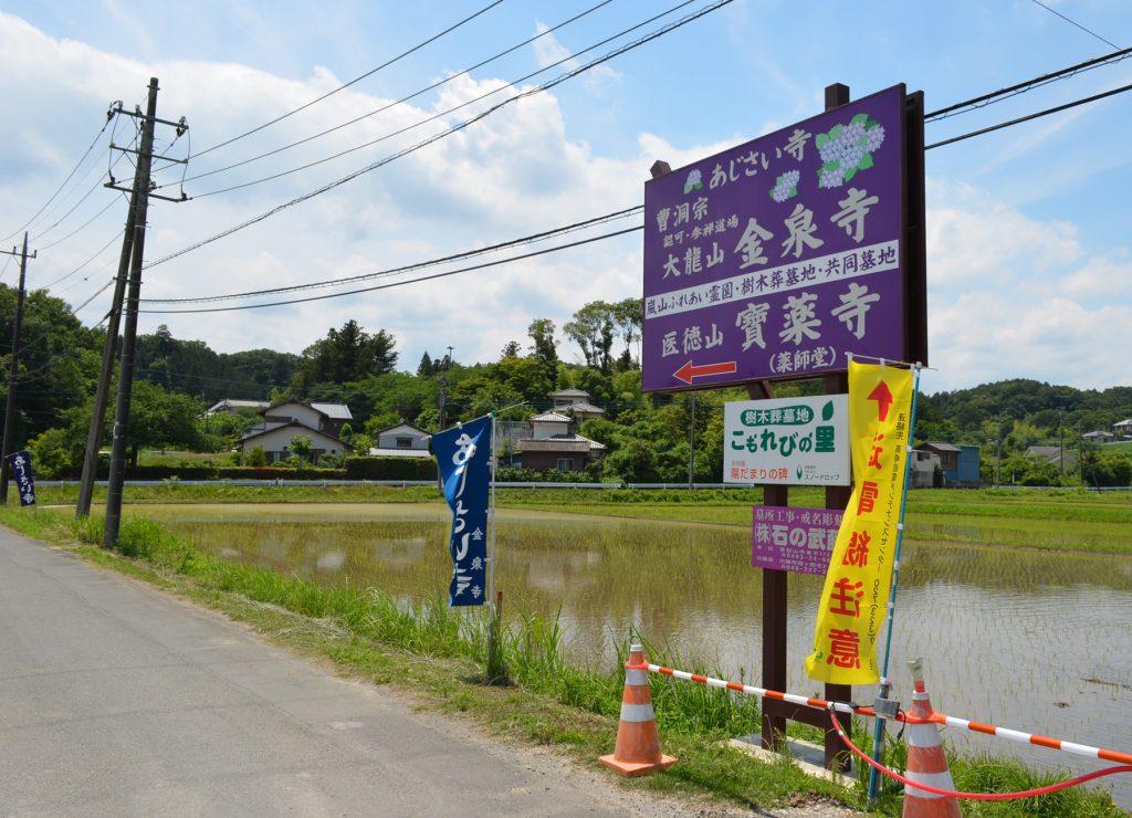 埼玉県嵐山町にあるあじさい寺と呼ばれている金泉寺さんの入口を示す看板。田んぼの中に立っています。