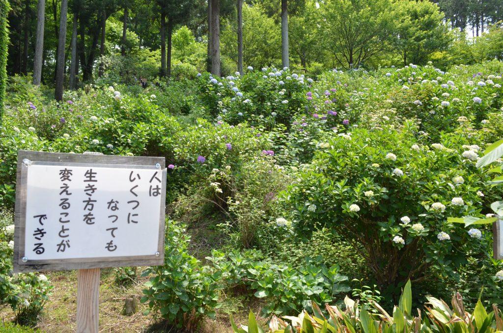 あじさい寺(金泉寺)境内に立っている有難い言葉が書かれた掲示板その5 「人はいくつになっても 生き方を変えることができる」