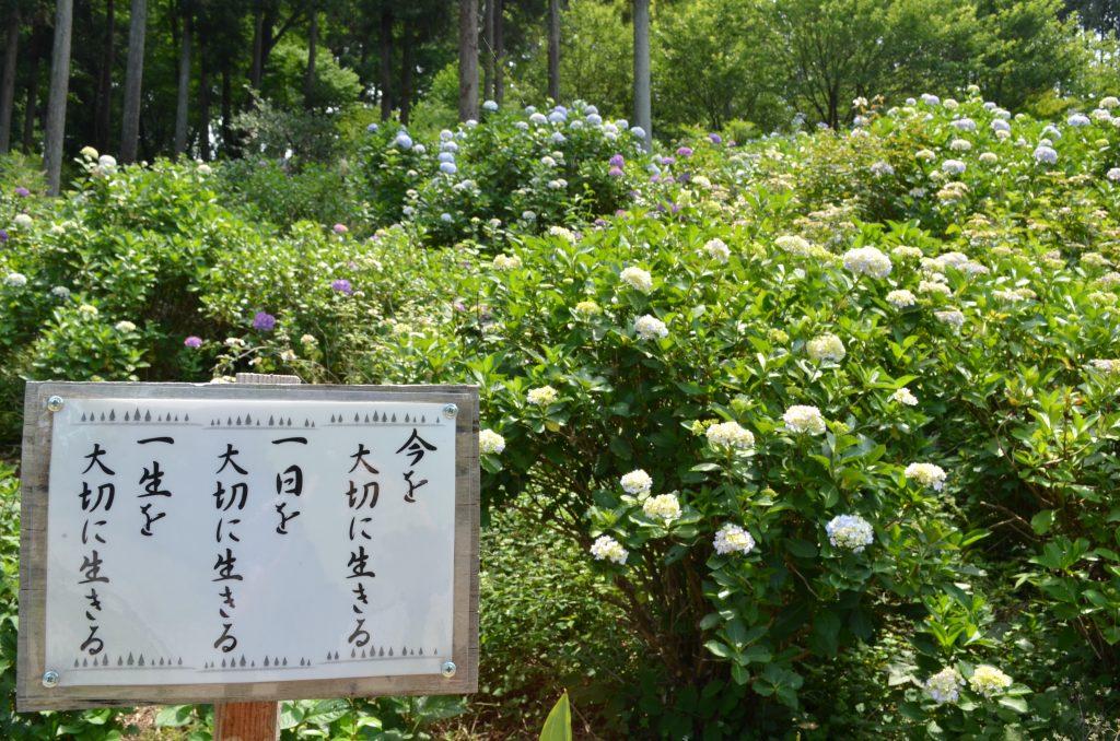 あじさい寺(金泉寺)境内に立っている有難い言葉が書かれた掲示板その4 「今を大切に生きる 一日を大切に生きる 一生を大切に生きる」